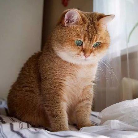 大肥猫的博客